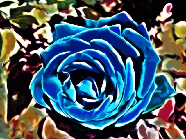 Blue Rose 2013