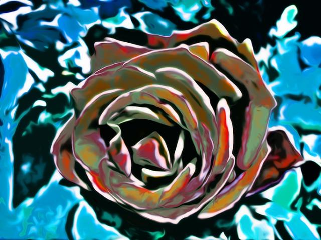 Yellow Rose 2013