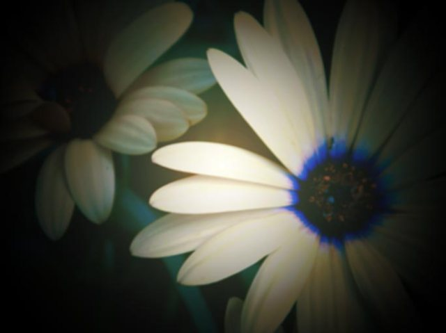 Flowers 1344002