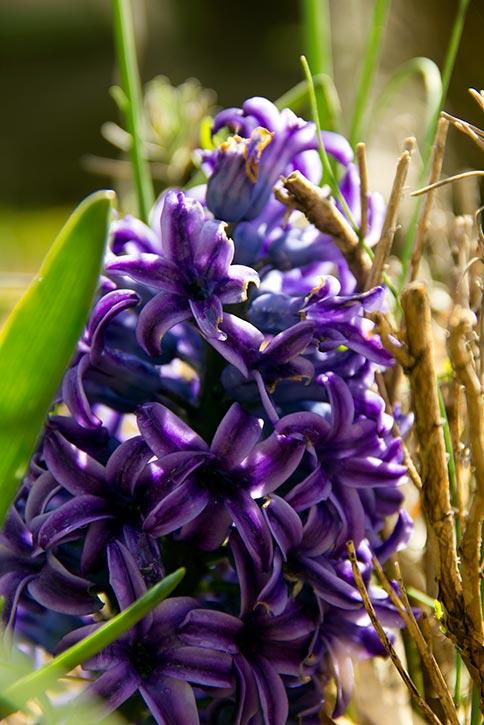 Spring flower 0