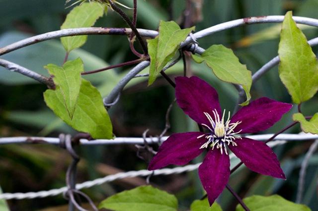 Flower/Vine