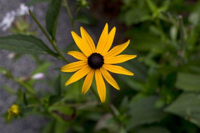 Same type of daisy