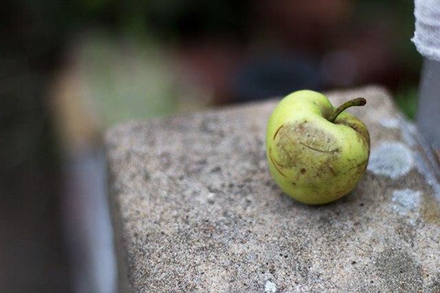 Just a bad apple