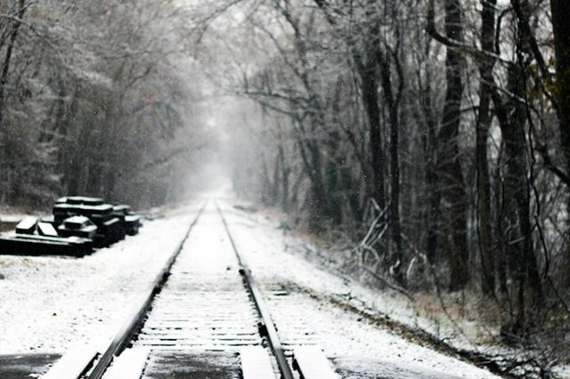 Track Snow Trees