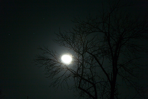 Moon and the tree