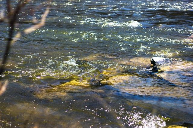 River edge 3