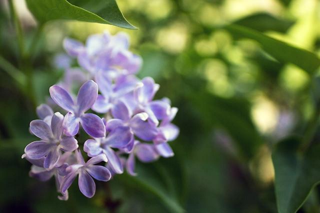 Spring flowers 24