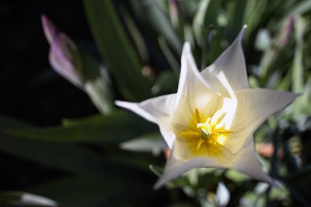 Spring flowers 26