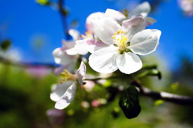 Spring flowers 27
