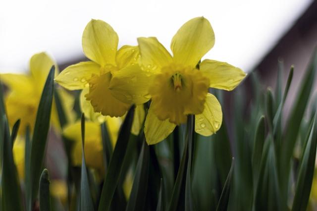 Spring flowers 4