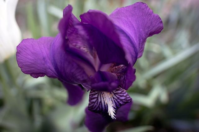 Spring_flowers_35