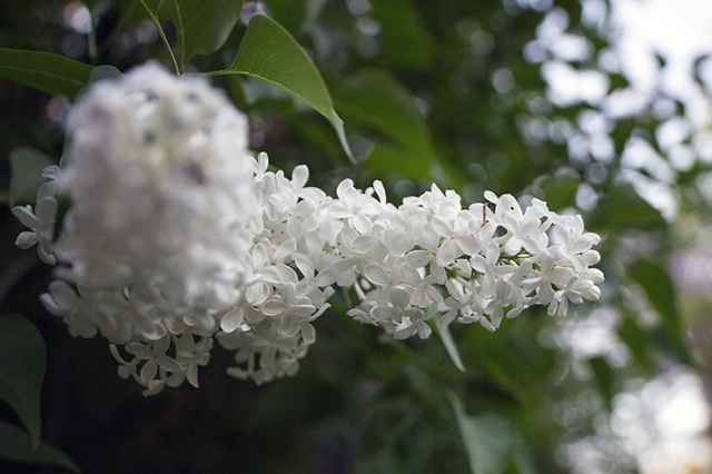 Spring flowers 36