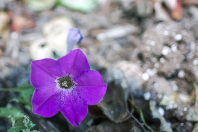 Summer Flower 10