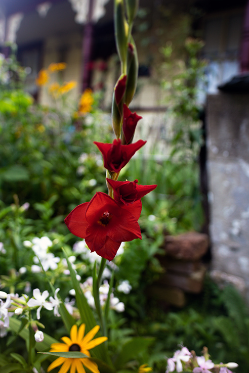Summer Flower 11