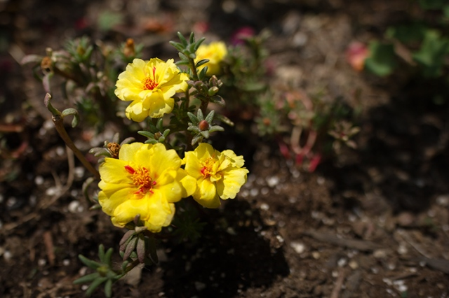 Summer Flower 13