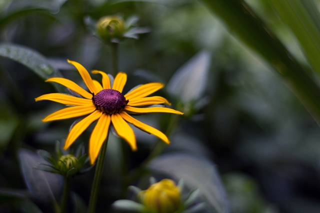 Summer-Flower_7