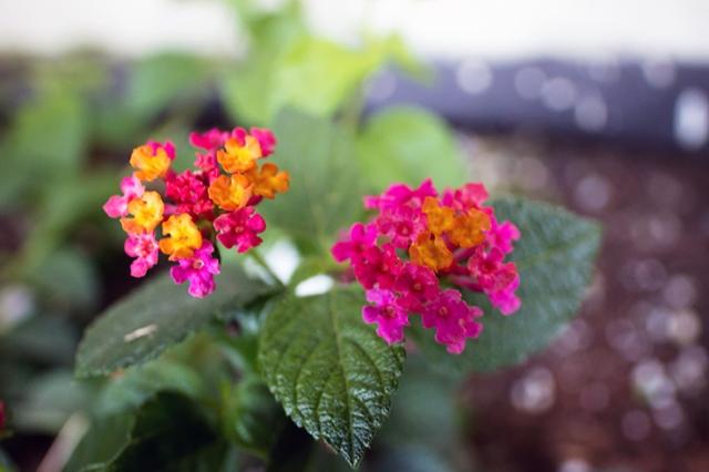 Summer Flower 9